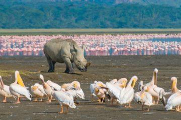 Lake-Nakuru Rhino